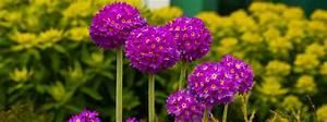 Southon Plants Of Dormansland Surrey Extraordinary Nursery