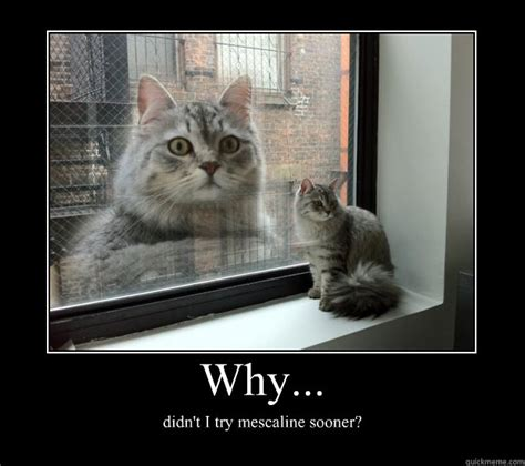 Lol Cat Meme - lolcat meme driverlayer search engine