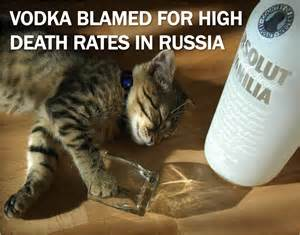 cat vodka russia archives plus cats