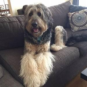 67 best Pet Search images on Pinterest