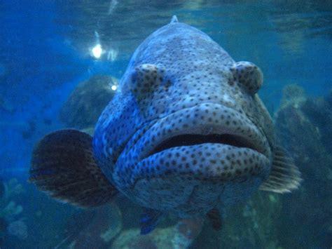 file poisson aquarium jpg