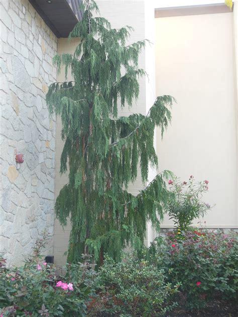 landscape plant options keystone lawn company