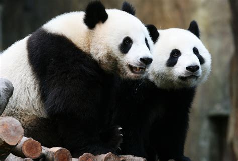 top   endangered species   planet