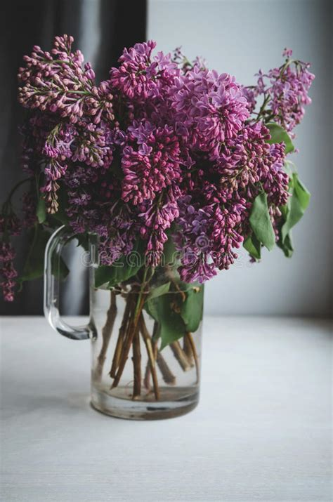 life  blooming branches  lilac stock photo
