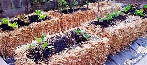hay bale gardening gardening for the future hay and straw bale gardening