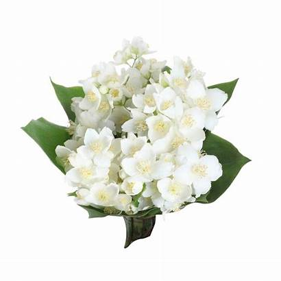 Jasmine Flower Flowers Bouquet Arabian Bunga Clip
