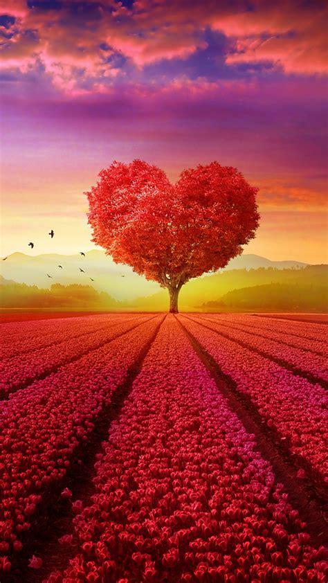 wallpaper love heart tree flower garden heart tree