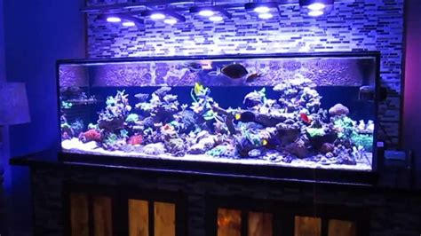 saltwater fish tank reef aquarium myreefliving ben