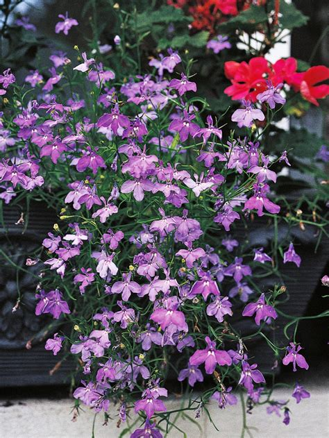 shade loving flowers for pots shade loving container plants hgtv