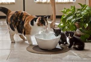 water fountains for cats review and giveaway drinkwell ceramic
