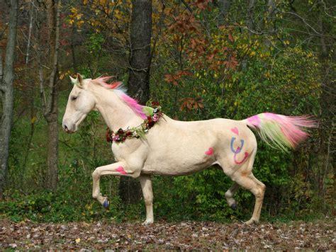 horse pony dollar tree