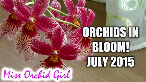 how to make orchids bloom again orchids in bloom july 2015 youtube