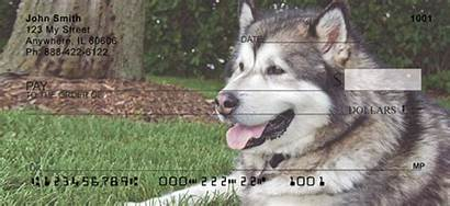 Malamutes Alaskan Puppies Dogs Checks Animals 123cheapchecks
