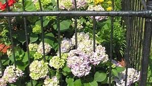 Mole Repellent Plants