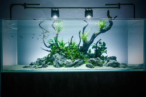 Aquascape Design Layout by 50 Stunning Aquascape Design Ideas Aquascaping