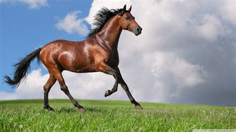 Running Horse 4k Hd Desktop Wallpaper For 4k Ultra Hd Tv