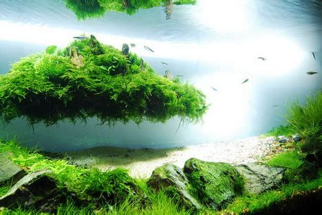Most Beautiful Aquascapes by Beautiful Aquascaping Photo Collection Quertime