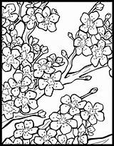 Cherry Blossom Coloring Chinese Lantern Tree Festival Japanese Colorear Template Coloriage Malvorlagen Printable Blossoms Colouring Sakura Sheets Getcolorings Muster Cherries sketch template