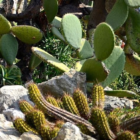 cactus et plantes grasses exterieur