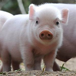 Cute Piglets at the Zoo | POPSUGAR Pets