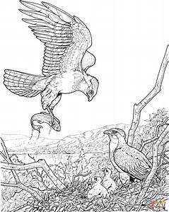 Ausmalbild: Adler bringt einen Fisch für seinen Nachwuchs