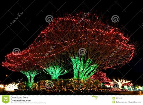 how to do christmas lights on trees lighted christmas tree with others 75000 christmas lights