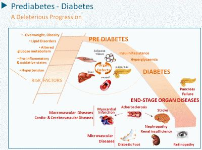 diabetes dialectics normal blood sugar levels