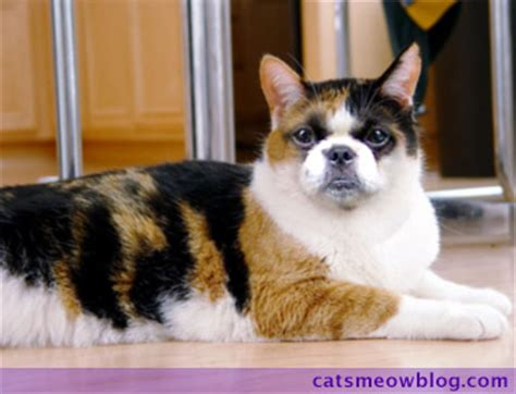 Thursday 13: Cat-Dog Hybrids - Catster