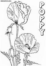Poppy Coloring Colorings sketch template
