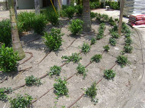 drip irrigation mulch ta irrigation and sprinkler installation free estimate
