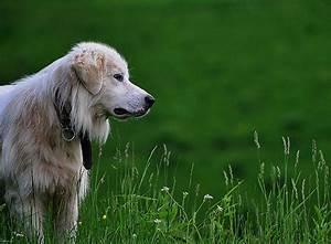 Zecke Entfernen Hund Kopf Steckt : zecke entfernen so klappt es ganz einfach zooroyal magazin ~ Orissabook.com Haus und Dekorationen
