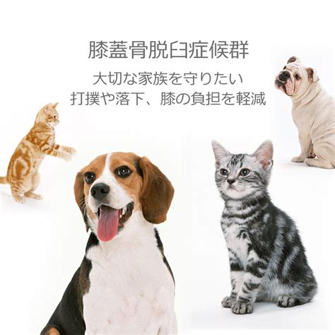 takumisofa  dogs cats pet steps step move