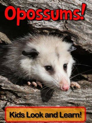 opossums learn  opossums  enjoy colorful pictures   learn  becky wolff