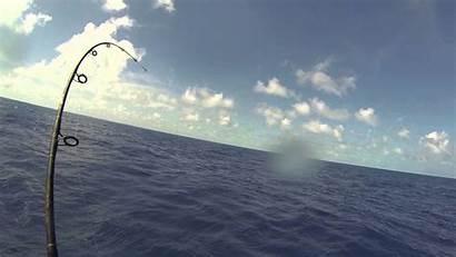 Fishing Saltwater Florida Offshore Wallpapers Sailfish Gopro