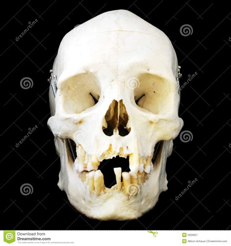 human skull front view royalty  stock photography
