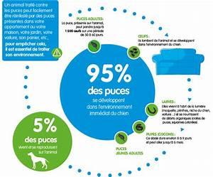 Puce De Chien : collier seresto bayer anti puces et tiques pour chien ~ Melissatoandfro.com Idées de Décoration