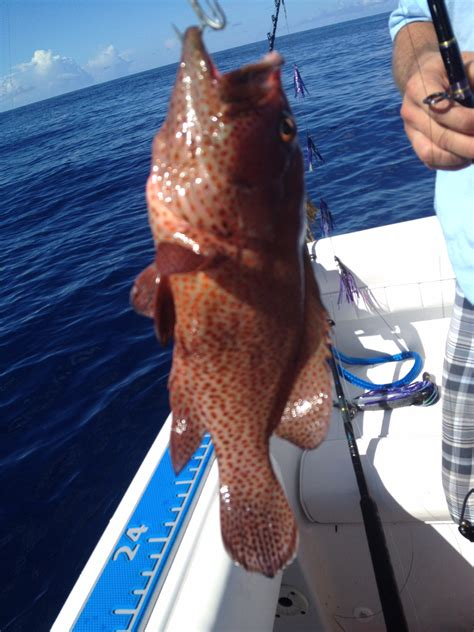 grouper different species fishing fish offshore saturday bottom report market thehulltruth