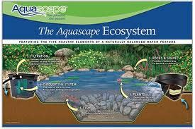 Aquascape Ecosystem by Aquascape Ecosystem Kingdom Landscaping