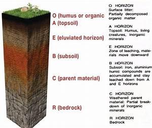 Soil Types  Sandy  Clayey  U0026 Loamy