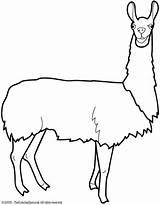 Llama Coloring Drawing Head Alpaca Printable Template Animals Vbs Llamas Colouring Llamacorn Easy Clipartmag Crafts Animal Pixshark Spot Flames Getcolorings sketch template
