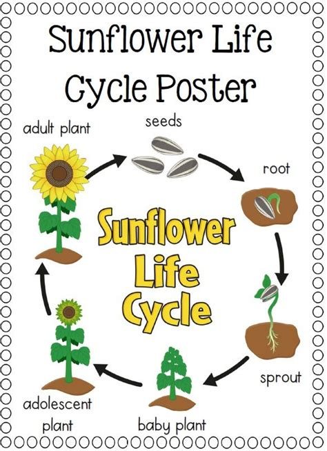 Life Cycles  Pumpkins, Ants And Life Cycles