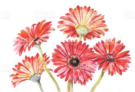 drawn bouquet daisy bouquet pencil   color drawn