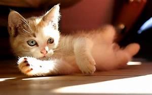 Imágenes De Gatos En Hd Para Fondo De Pantalla Para Descargar
