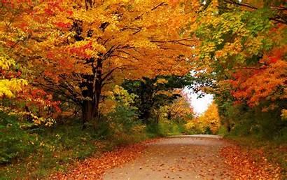 Autumn Trees Nature Foliage Seasons Desktop Widescreen