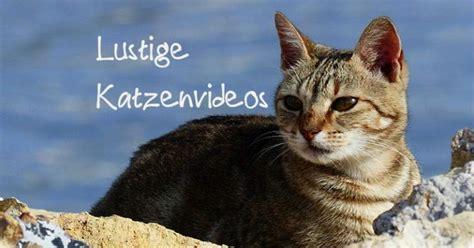 bildergalerie lustige katzenvideos die  top clips