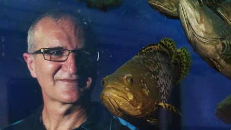 fish grouper finfish super enterprise international nav manager cairns dr brendan general