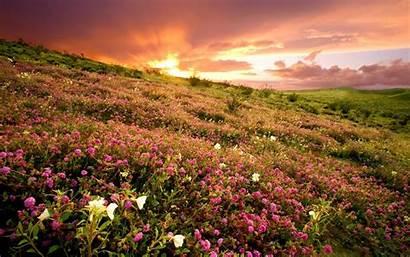 Field Flower Wallpapers Desktop