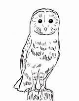 Owl Coloring Barn Pages Printable Template Owls Sheet Adult Today Samanthasbell Birds Reference sketch template