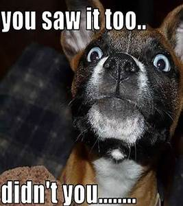 Funny Dog Pictures with Captions - I AM BORED