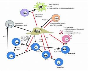 Immunomodulation of MSC. A summary of the range of soluble ...
